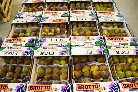 Brotto1