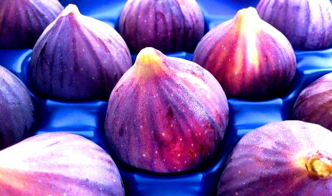 bursa-black-figs