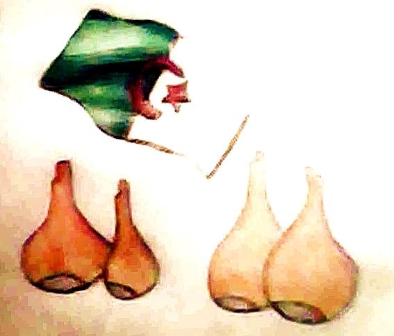 higos-argelia