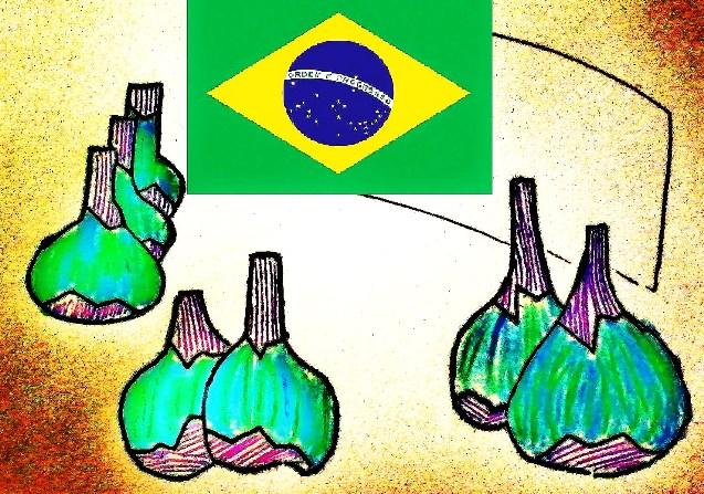 brasil higos