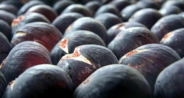 black bursa figs
