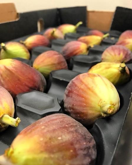 catania figs