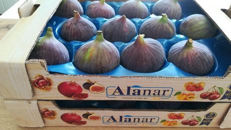 Alanar1